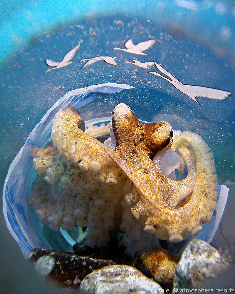 Motiti Octopus by Daniel Geary