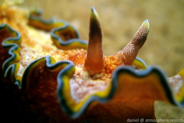 10 things you did not know about Nudibranchs
