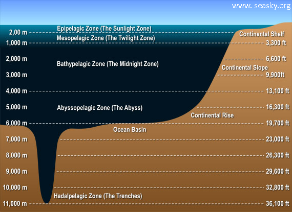 Deep Sea Diagram