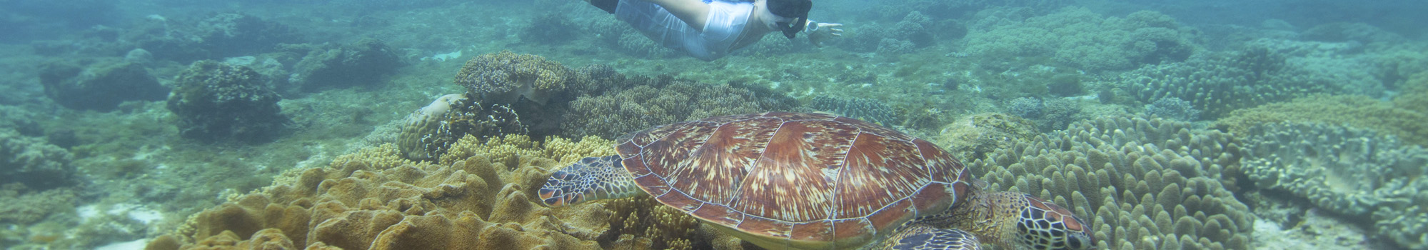 Snorkeling with turtles in Apo island is accessible for everybody with Atmosphere Resort in the Philippines
