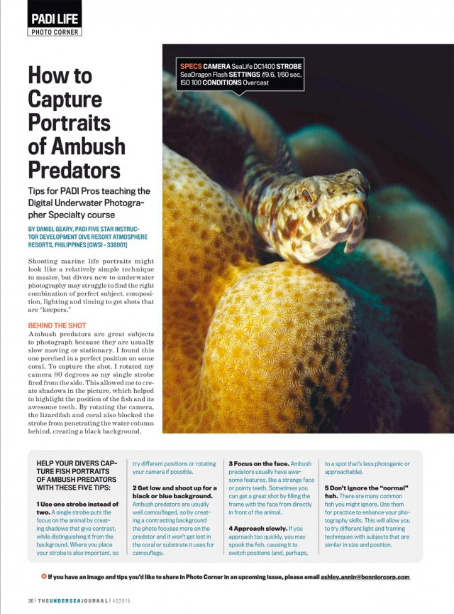 How to photograph predators in Undersea Journal by Daniel Geary at Atmosphere Resorts & Spa Philippines