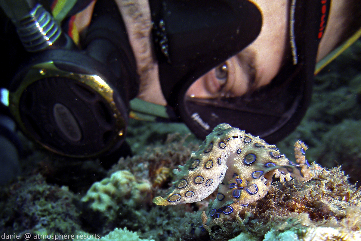 Underwater selfie with a blue ringed octopus at Atmosphere Resort Philippines with Daniel Geary