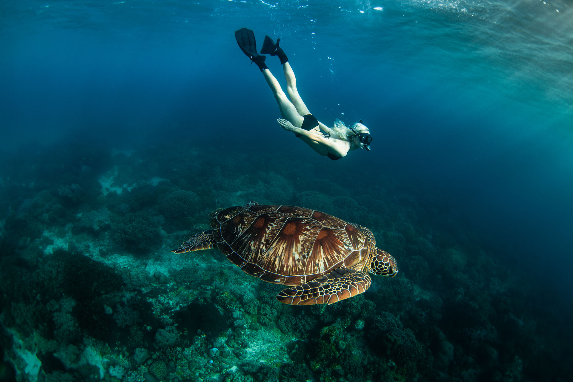 Turtle and snorkeler in Apo by Tommy Schultz