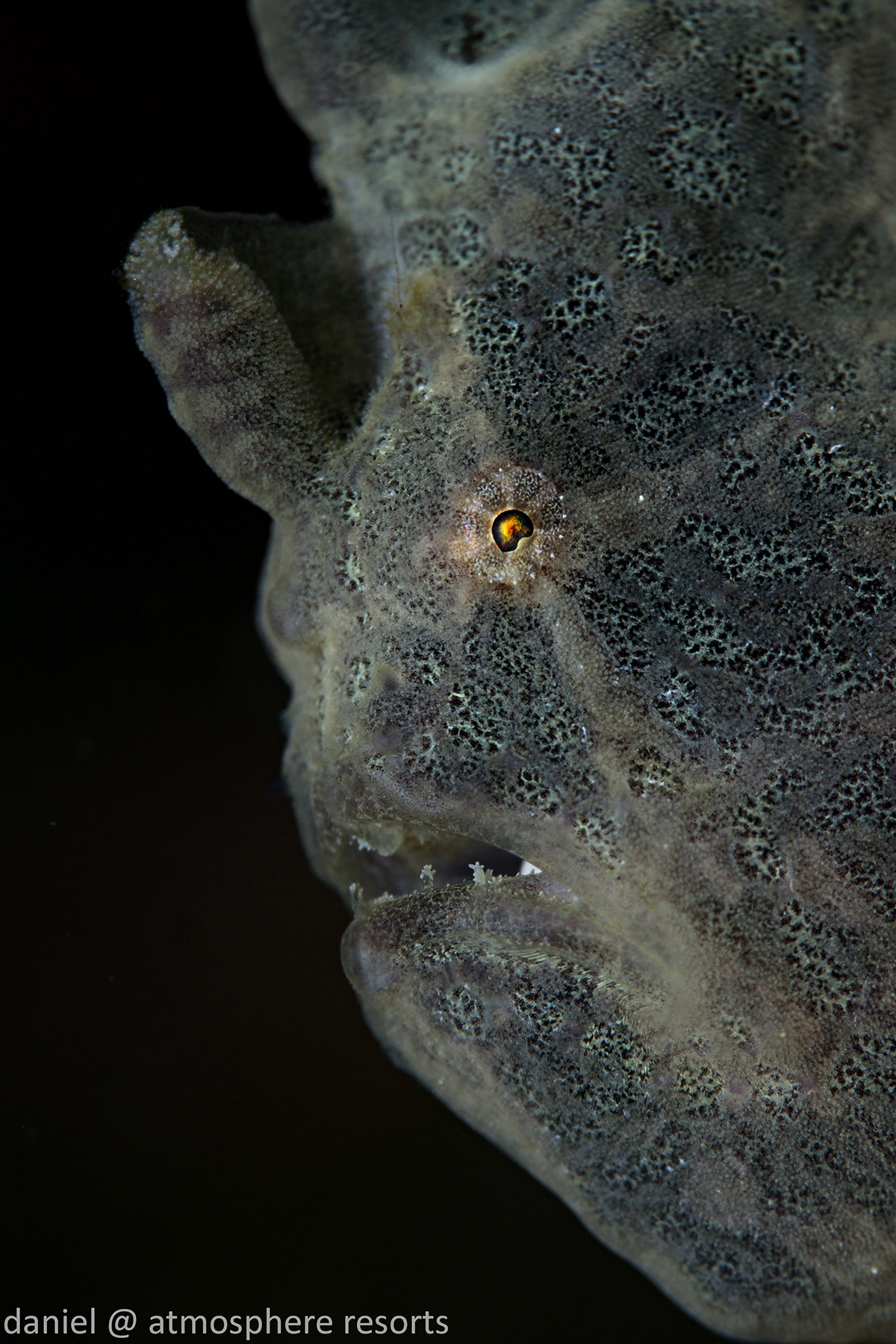 Frogfish by Daniel Geary