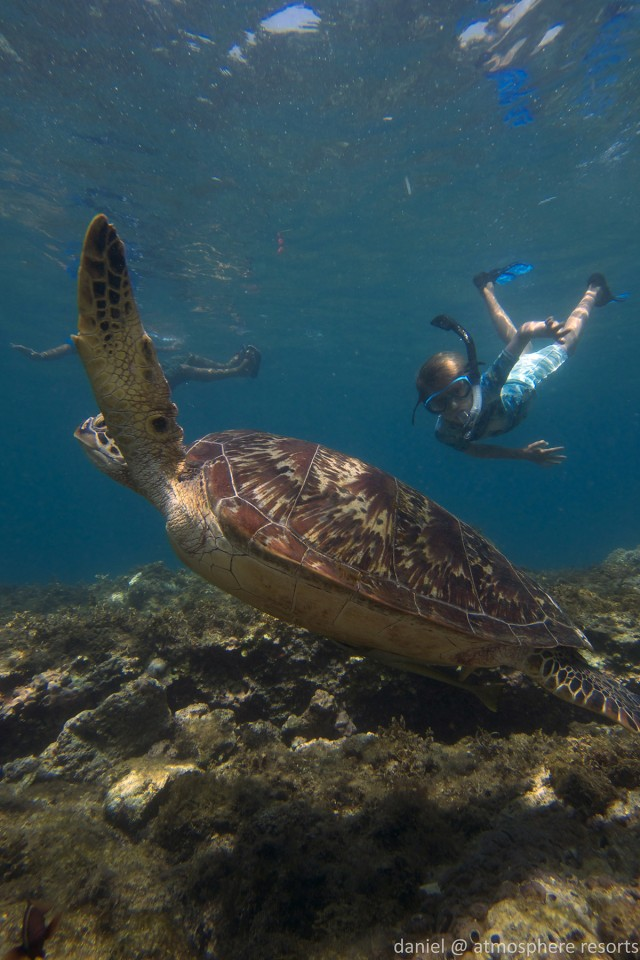 Kids snorkeling with turtle at Apo island by Daniel Geary