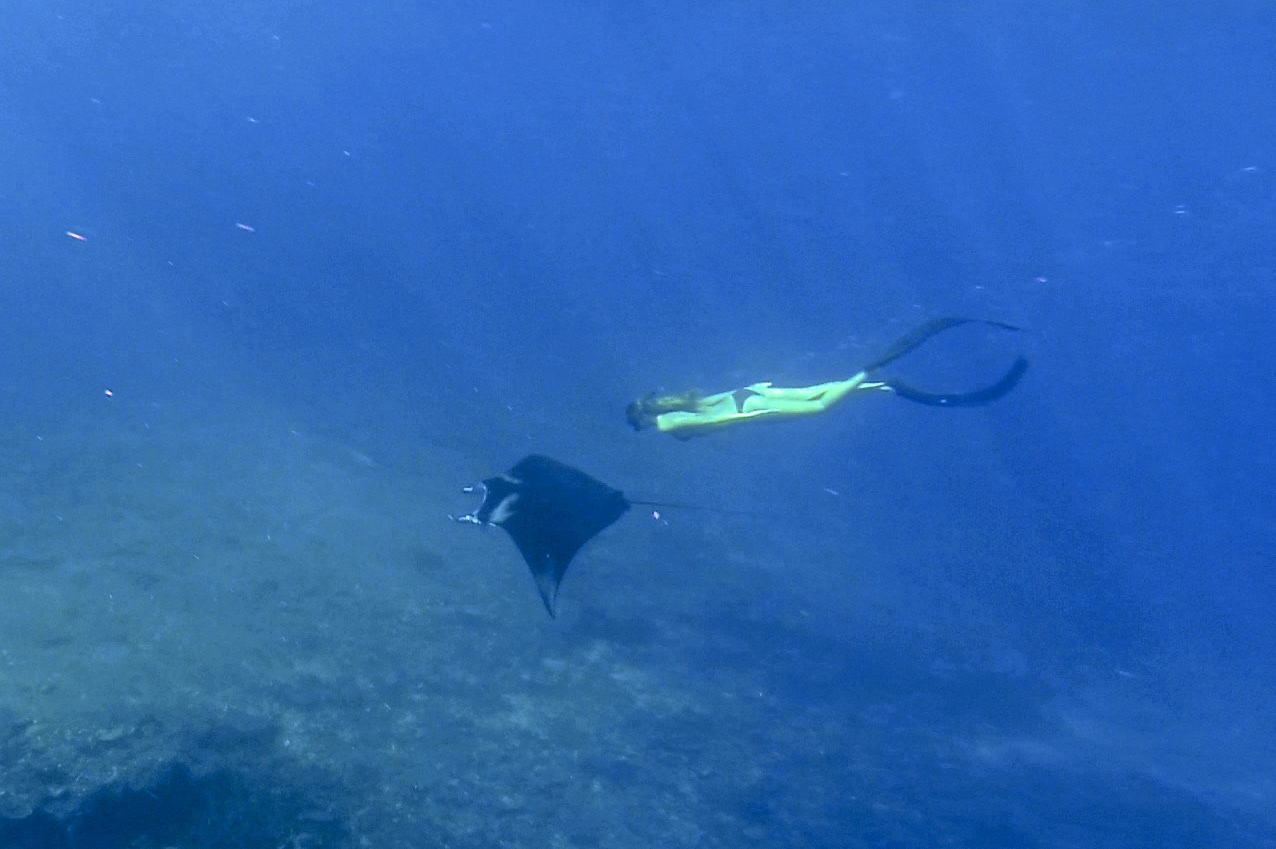 Manta with freediver Komodo 2015 by Etoile Smoulders