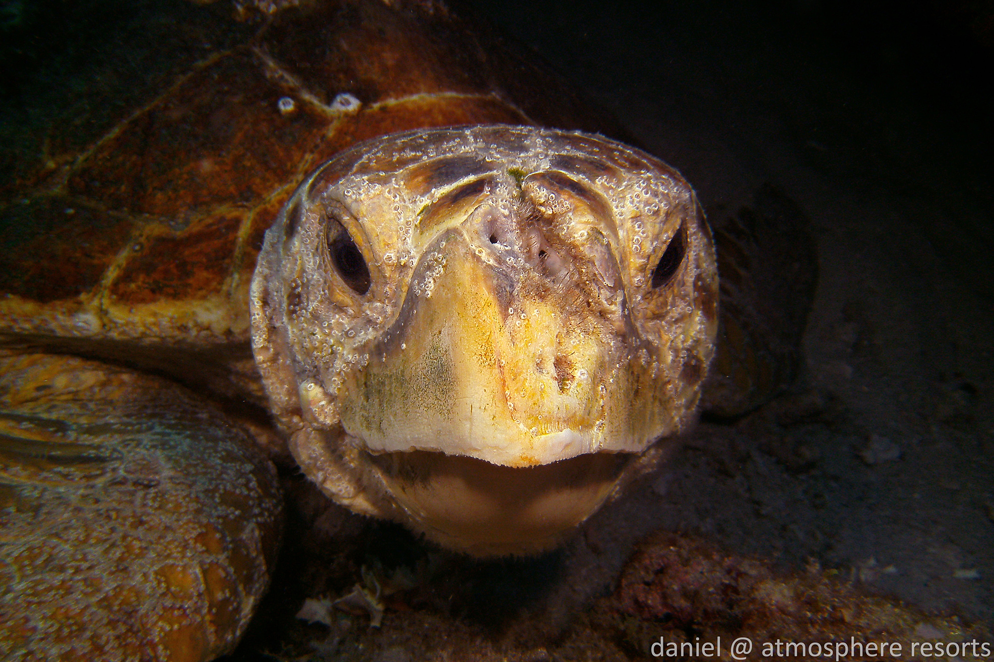 Loggerhead sea turtle from Florida by Daniel Geary
