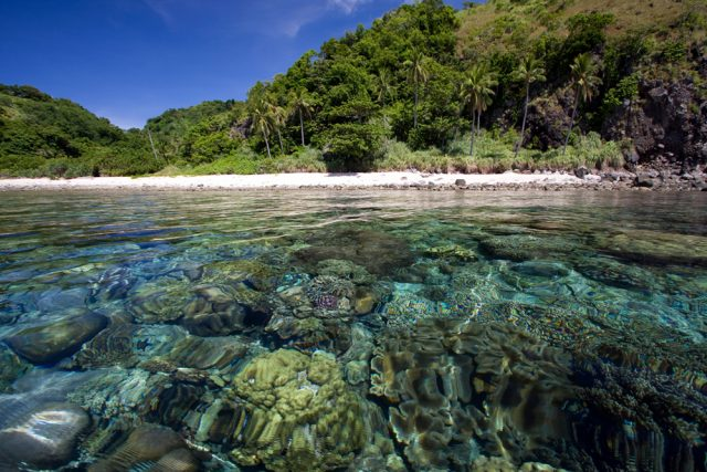 Apo Island beach corals, Atmosphere resorts, Dauin, Philippines