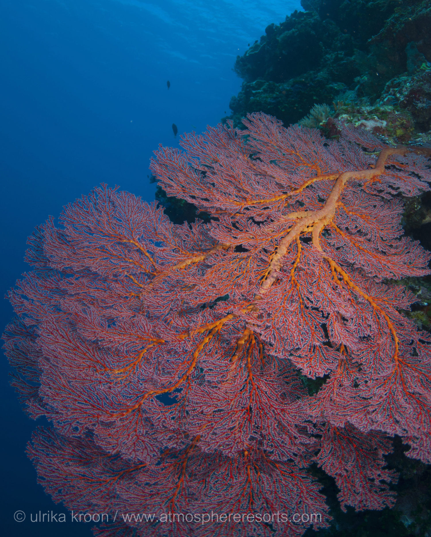 Palau Siren liveaboard of Siren Fleet with Atmosphere