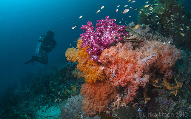 Reef in Raja Ampat 2016 by Ulrika Kroon