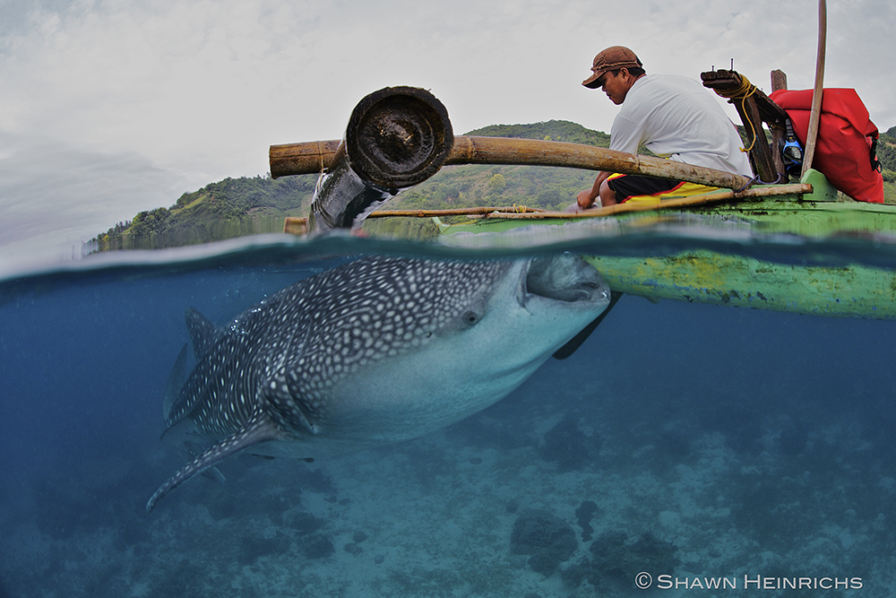 whale shark 2 in oslob with Atmosphere Philippines