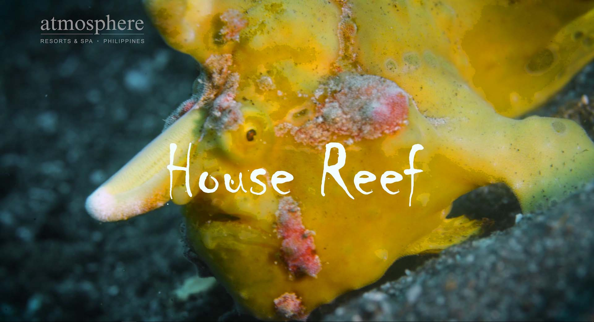 Atmosphere house reef Dauin Dumaguete Philippines